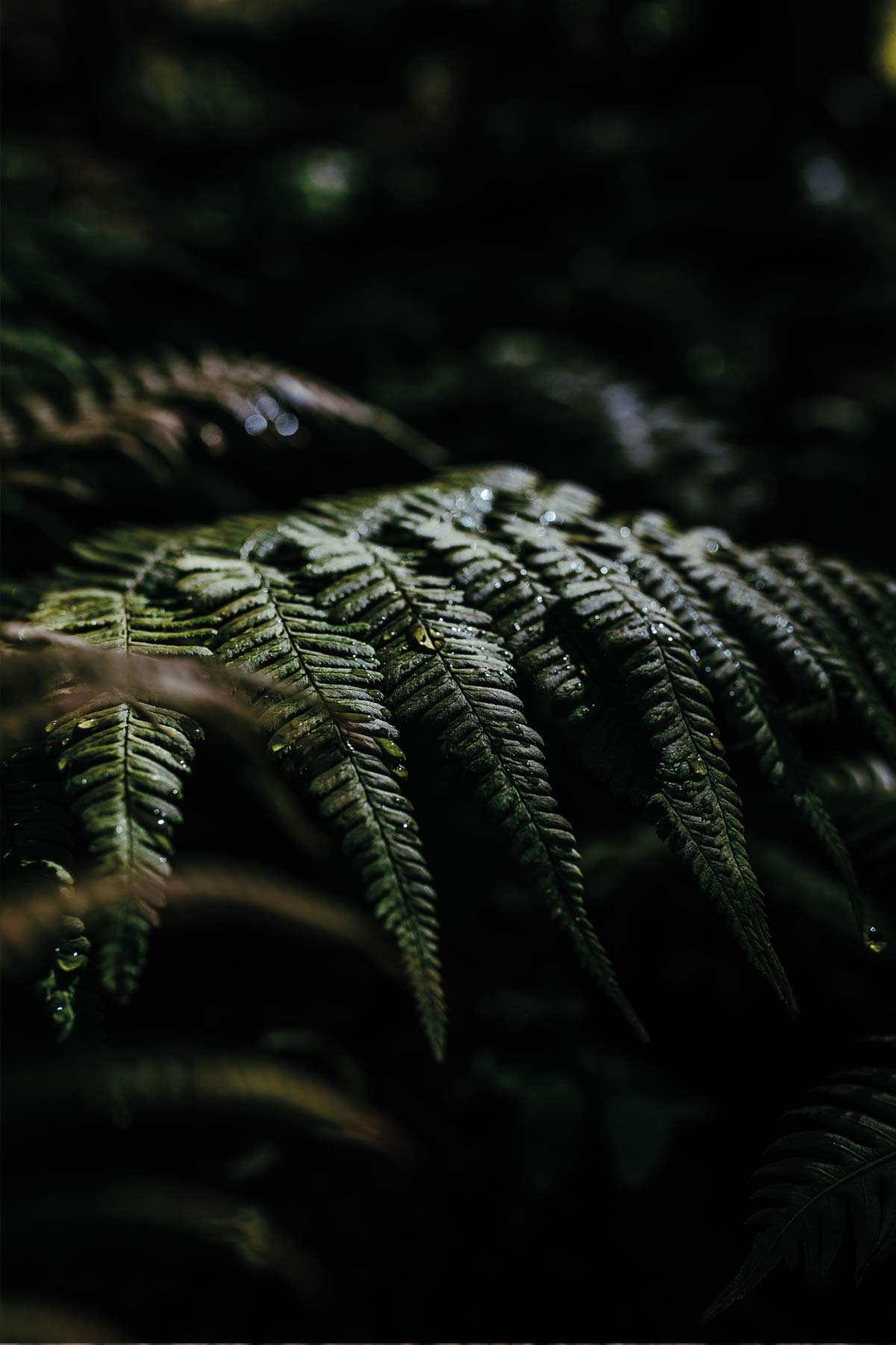 Madeira-mountains-flora-Travel-Photography-Portugal