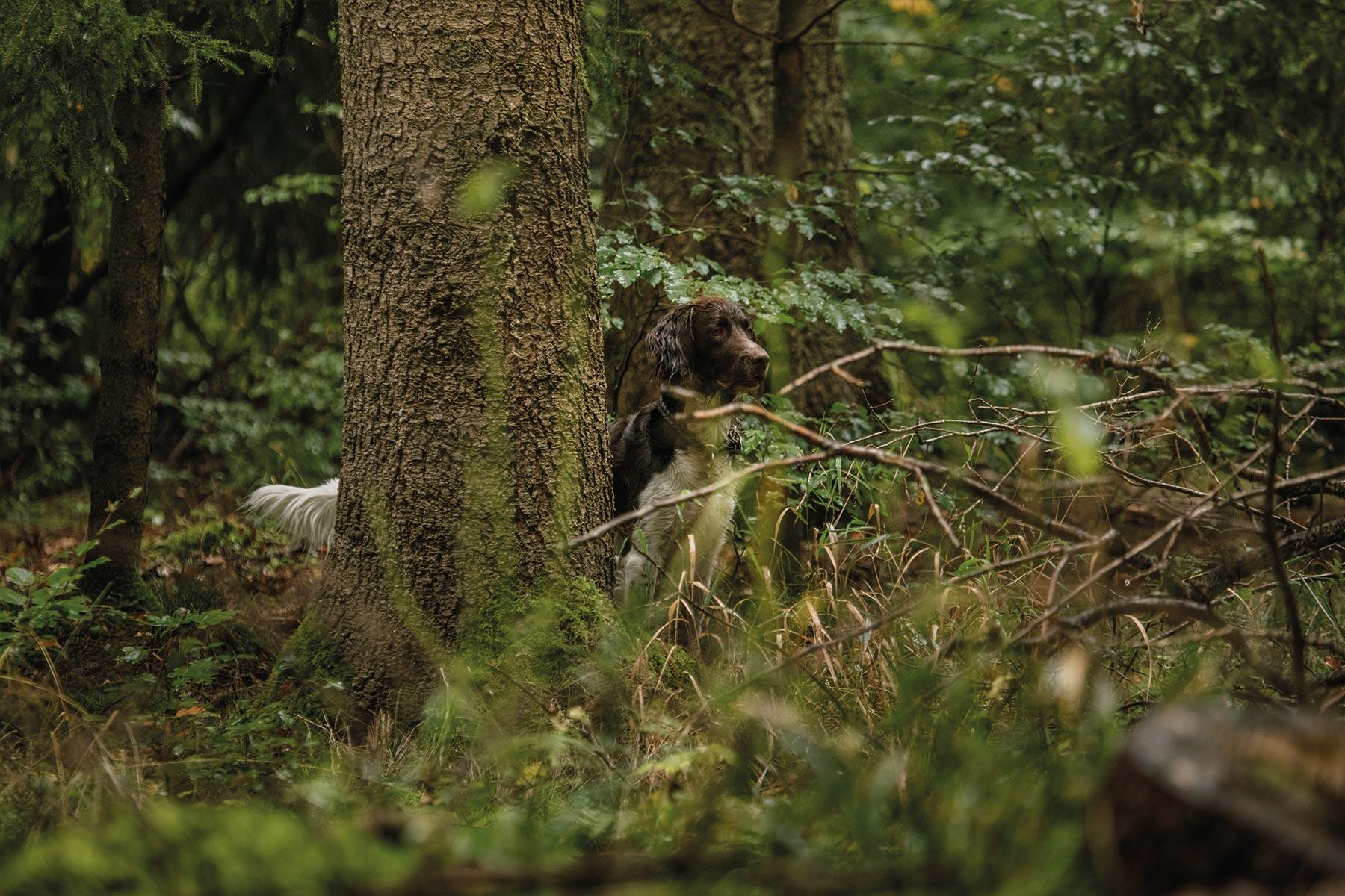 kleiner-muensterlaender-hund-tierfilm-wald-doku-outdoor-hundefilm-jagdhund-basti-kaspar